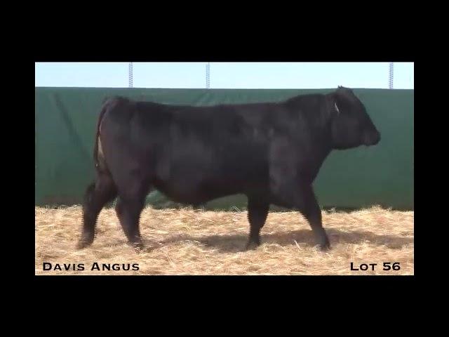 Davis Angus Lot 56