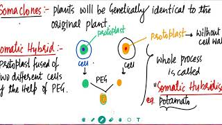 Strategies For Enhancement In Food Production Class 12 Neela