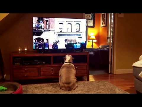 UNBELIEVABLE. Bulldogs Cheer On Stray Canine In Budweiser Commercial.