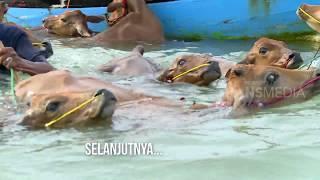 INDONESIAKU | IRONI DI PULAU SAPUDI (22/10/18) Part 2