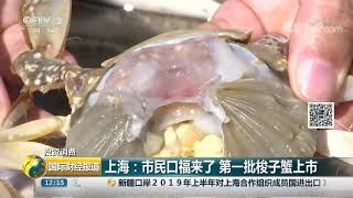 [国际财经报道]投资消费 上海:市民口福来了 第一批梭子蟹上市| CCTV财经
