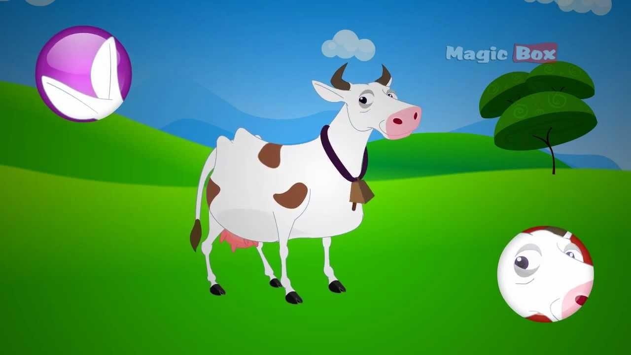 Kid Friendly Cow Videos