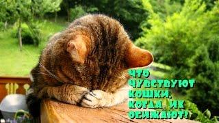 Что чувствуют кошки, когда их обижают