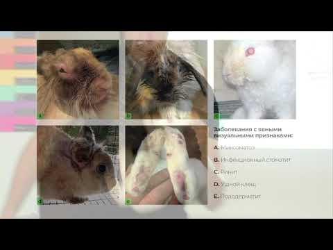 Видео: Easy Rabbits: Осмотр поголовья перед покупкой (Визуальные признаки заболеваний)