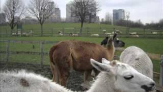 Mudchute Farm - London