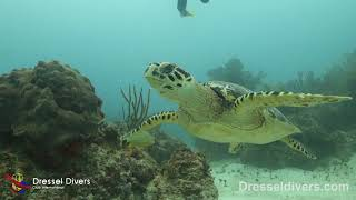 Scuba Diving in Playa Paraiso (Riviera Maya) - August 17th 2018 (Dressel Divers)