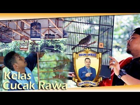 REUNI AKBAR KM : Lomba Burung Cucak Rawa Di Lapangan Burung Gitananda Pontianak