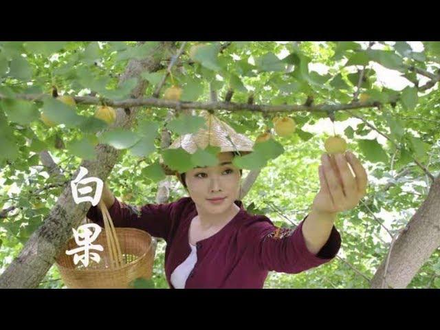 摘些白果,炖一锅秋季养生汤:白果炖猪小肠【滇西小哥】