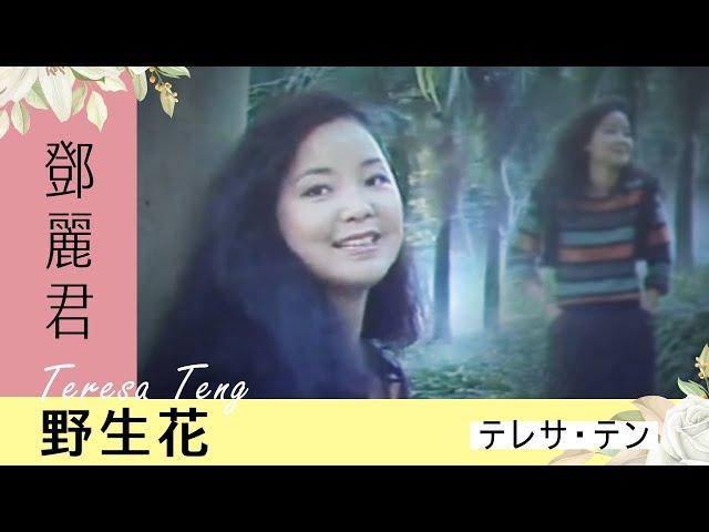 鄧麗君-野生花 Teresa Teng テレサ・テン