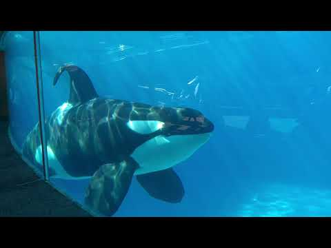 SeaWorld San Diego 2019 HD iPhone X
