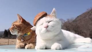 ファッショナブル…?香り高い椎茸、猫の頭部にジャストフィット