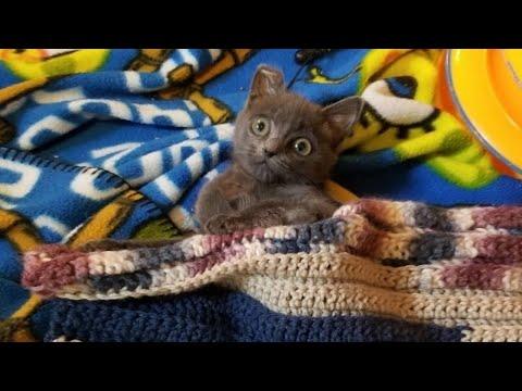 Котёнок чьи лапки были за 9 апреля