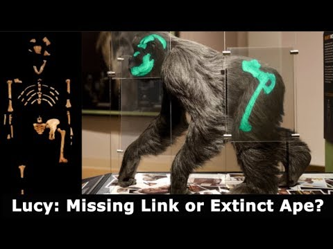 Lucy the Australopithecus: Missing Link or Extinct Ape?
