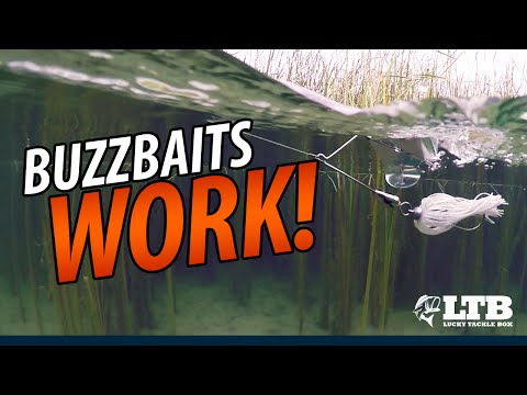 The Best Buzzbait Fishing Tip You've Ever Seen