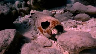Filfla - An incredible Malta Diving Experience