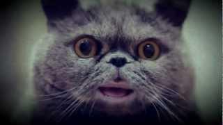 Поющий кот Сальвадор(, 2013-01-22T19:51:07.000Z)