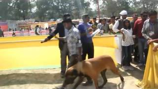 Beagle And Pug Dog Win All India Dog Championship 2015 In Allahabad