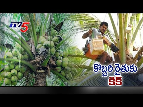 How to Make Coconut Neera ? | Special Report on Coconut Neera | TV5 News