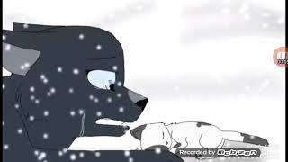 Клип коты воители. Твоя любовь это так красиво. Синяя звезда.