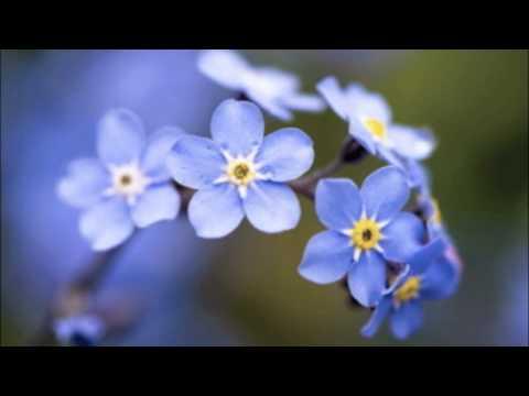 Danilo Riccardi Linea Blu Ethnic flowers