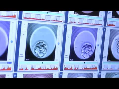 Embryoscope - Beverly Hills, Burbank, Valencia