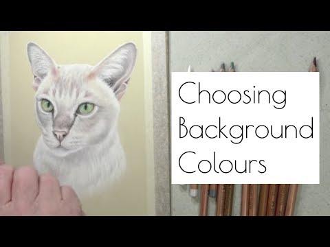 Picking Background Colours - Burmese Cat