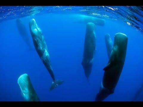 Как спят киты в океане видео