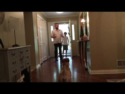 Training Talulah to Behave When Guests Knock