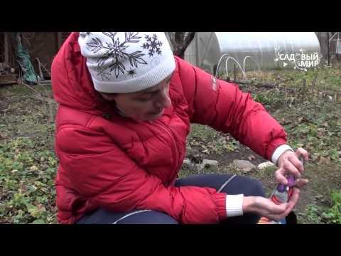Астры - Цветоводство - Цветоводство и садоводство - Мой