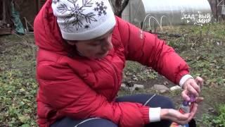 видео Астры