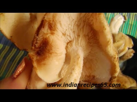 Shiitake Mushroom About, Nutritional Facts and much more
