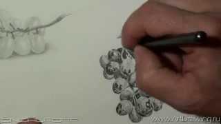 Рисуем черный виноград(как нарисовать черный виноград. Бесплатный видео курс по рисованию http://www.artdrawing.ru/freelessons/5steps.html., 2015-04-28T11:35:01.000Z)