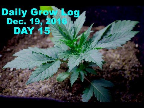 Daily Cannabis Grow Log - Dec. 19 | PLANTING COVER CROPS |