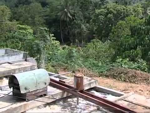 Latex Rubber Harvesting and Processing1]