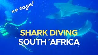 Amazing Shark Dive at Protea Banks, South Africa