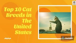 Top 10 Cat Breeds in The United States
