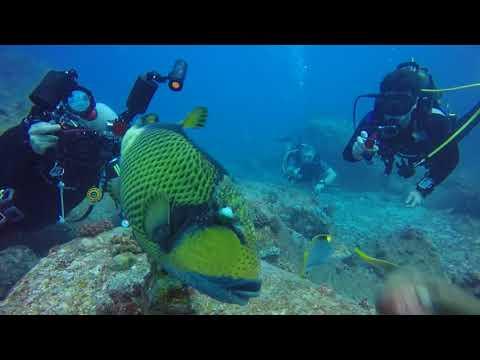 Petting A Titan Trigger Fish In Mauritius