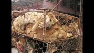 Chinese Fur Farms: The Truth