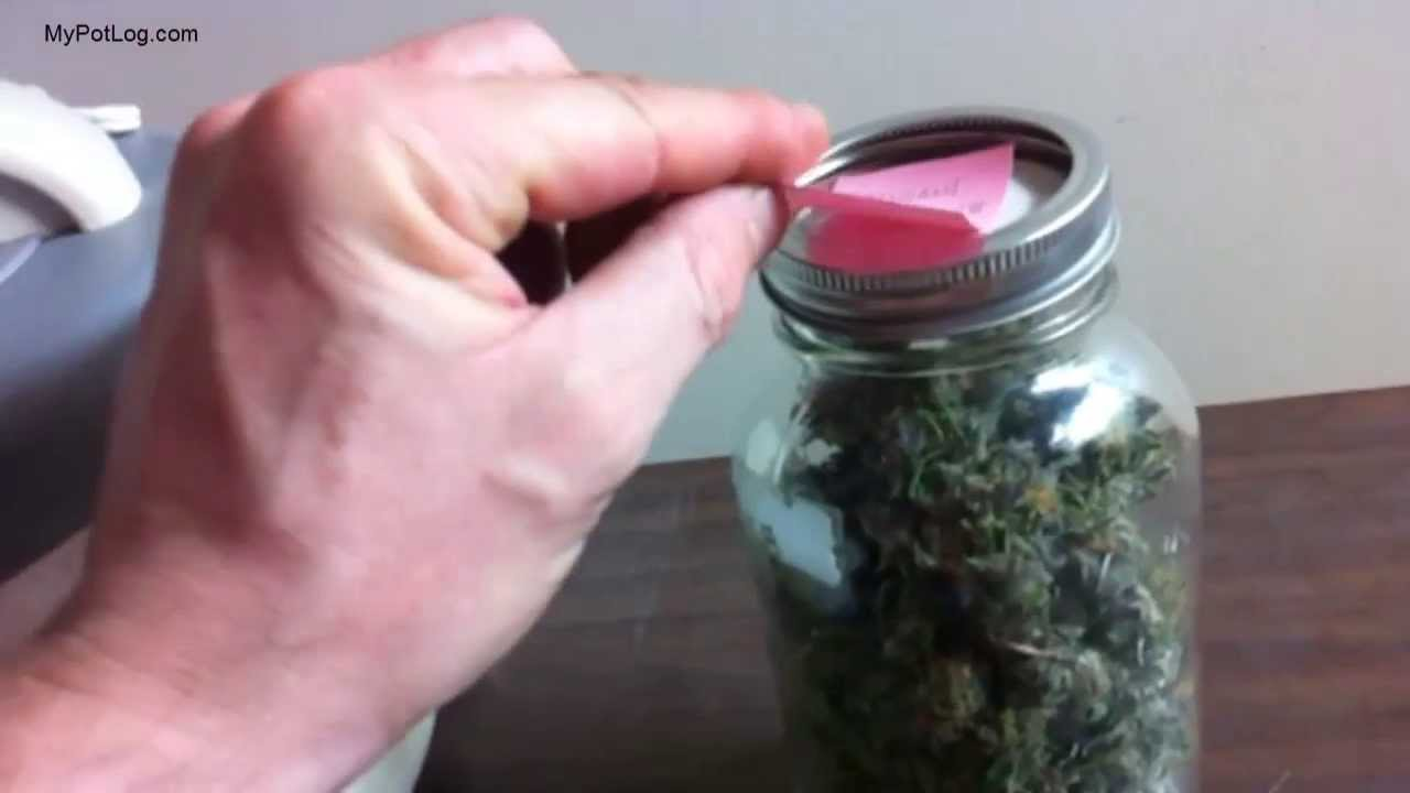Drying And Curing ~ Drying and curing marijuana medical cannabis home grower