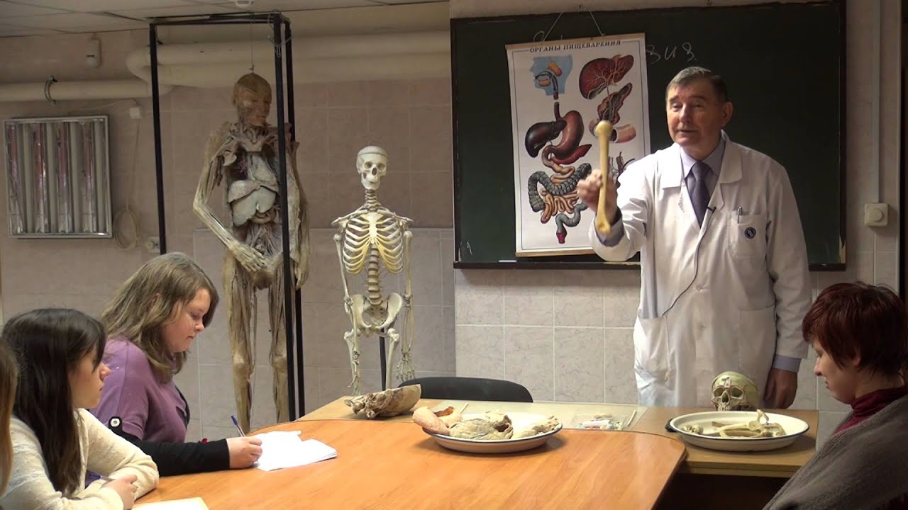 Место анатомии в патологии. Путешествие по замку Вирхова | Открытые лекции СПбГУ | СПбГУ | Лекториум