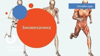 Биомеханика / Политех