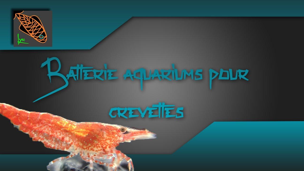 ma batterie d 39 aquariums pour crevettes d 39 eau douce lyn 39 aquariophilie youtube. Black Bedroom Furniture Sets. Home Design Ideas