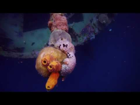 Stavronikita Wreck- Barbados
