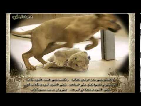 لا تأسفن على غدر الزمان لطالما رقصت على جثث الأسود كلاب Youtube