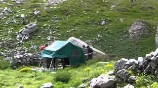 une transhumance dans les Pyrénées