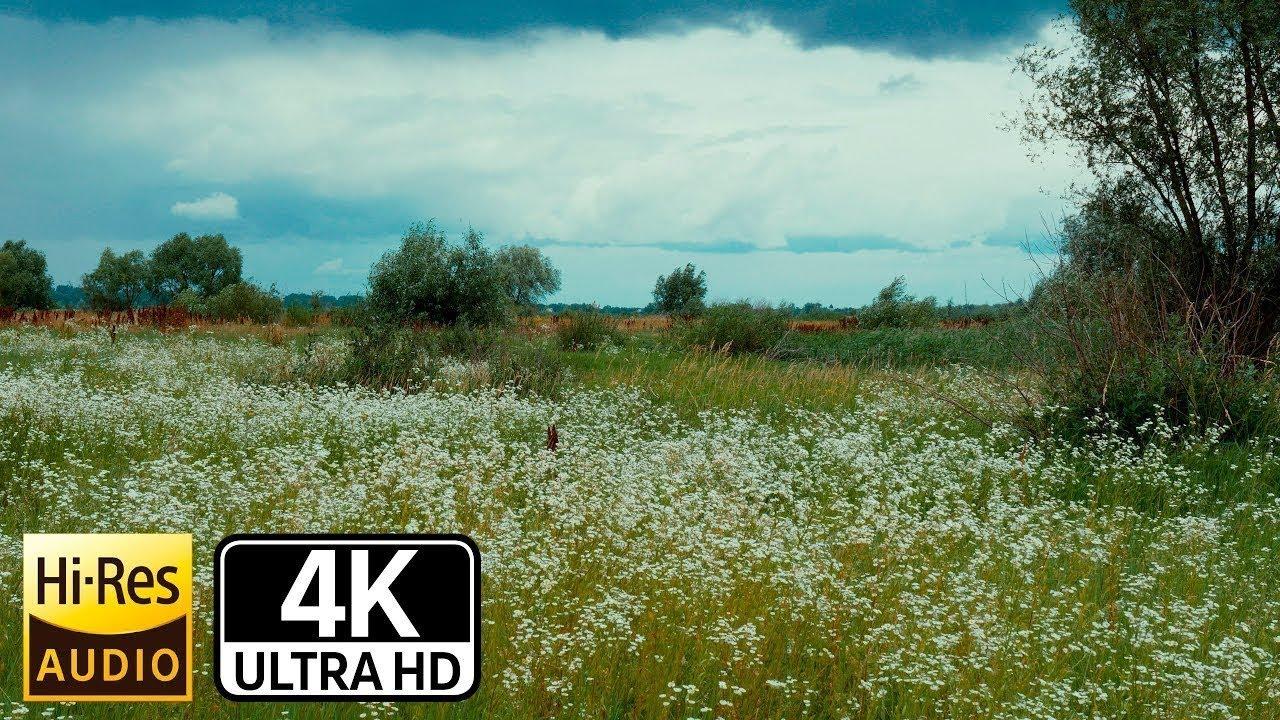 Active  track 4k relaxing Барахты dji Mavic Air,tripod ,color Cinema