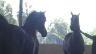 Rohara Arabians AHA Breeders Forum 2007