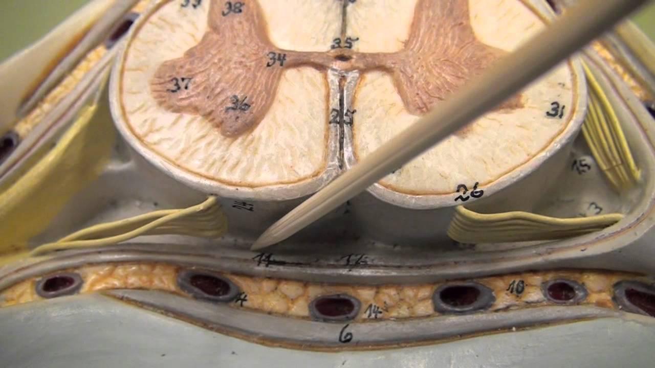 5th Cervical Vertebra Youtube
