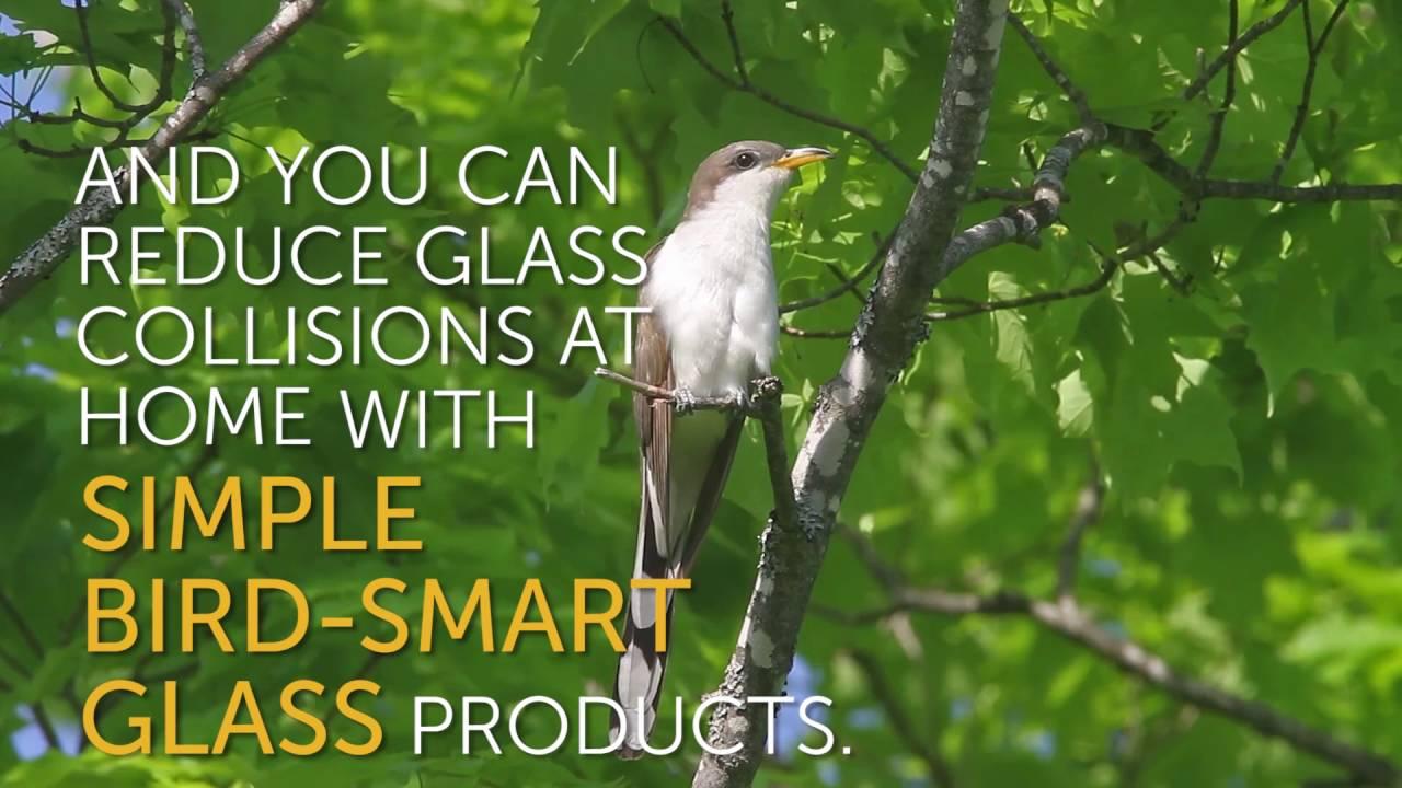 Help Stop Birds From Hitting Windows YouTube - Window stickers to deter birdsstickers to prevent birds flying into windows popular bird