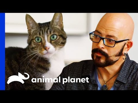 Jackson Helps Cat With Kidney Disease Get Healthier | My Cat From Hell